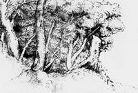 Группа деревьев (Тициан, 16 век)